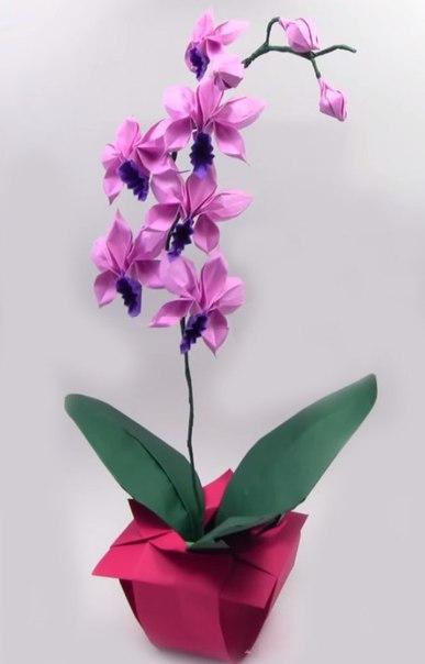 И уход за орхидеями оригами из бумаги